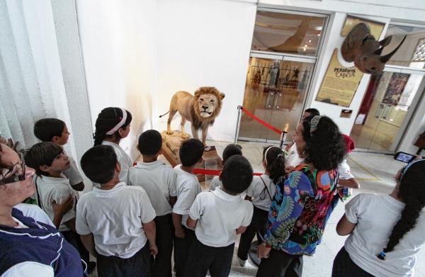 Un-león-hallado-en-casa-de-Zuloaga-se-exhibe-en-el-Museo-de-Ciencias