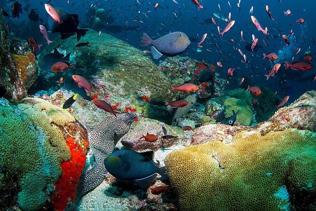 La vida bajo el mar en la isla Ascensión. Foto: Wetch