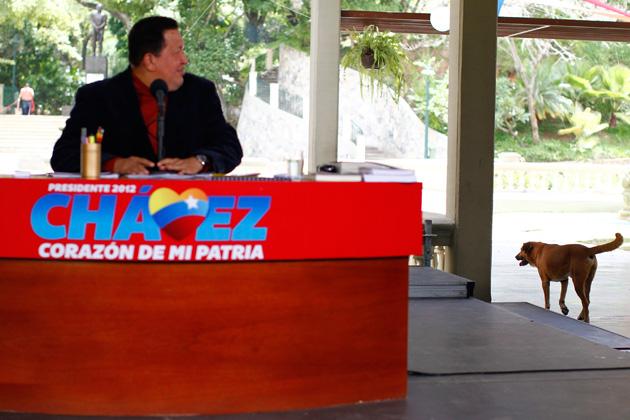"""Este perrito irrumpió en una rueda de prensa de Hugo Chávez. El presidente señaló que era """"elegante"""" y bromeó con la posibilidad de que perteneciera a Nicolás Maduro. Foto: Jorge Silva / Reuters / archivo / Noticias24"""