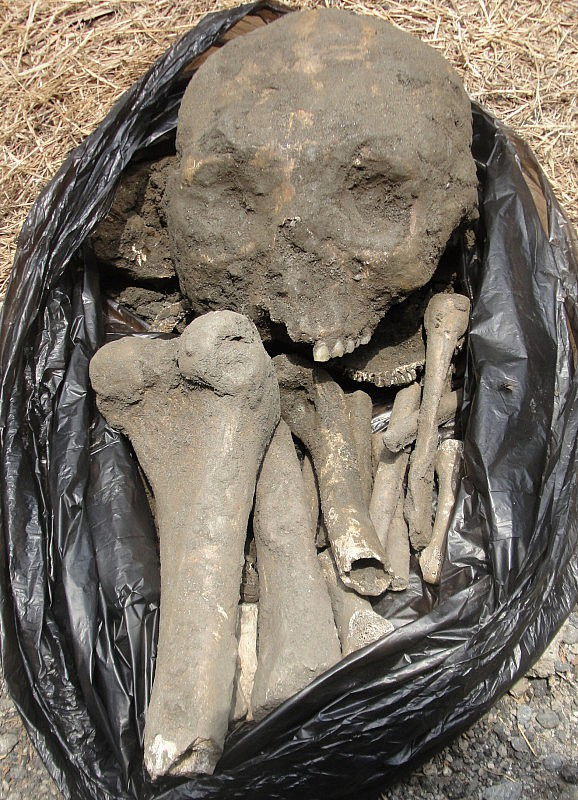 F1- Detalle de los restos óseos