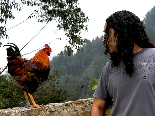 pollo_echeverri