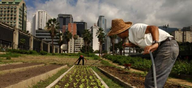 Agriculture-urbaine-fig1-FAO