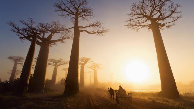 expedicion-baobab1