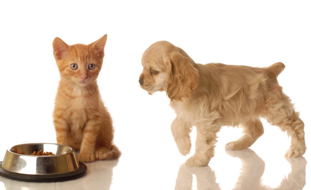 images-of-a-dog-and-cat-wallpaper